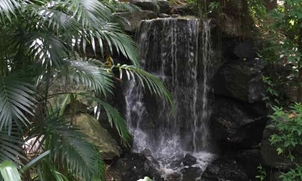 Enjoying The Mt Cootha Botanical Gardens