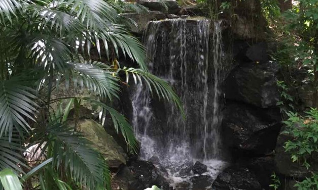 Enjoying The Mt Cootha Botanical Gardens