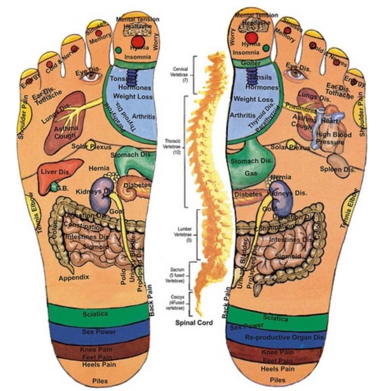 organ foot diagram tendons of the foot diagram #11