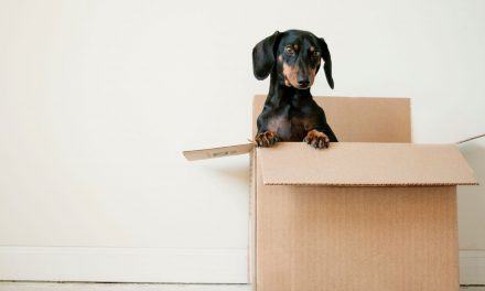 Tips On How To Make Moving Less Stressful