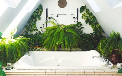 Plants That Thrive In Your Bathroom