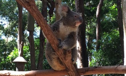 My Favourite Photographs From The Currumbin Wildlife Sanctuary