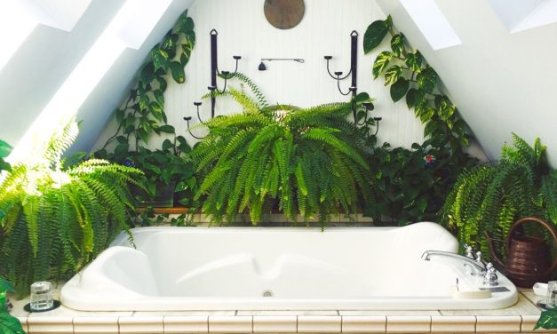 Plants To Thrive In Your Bathroom