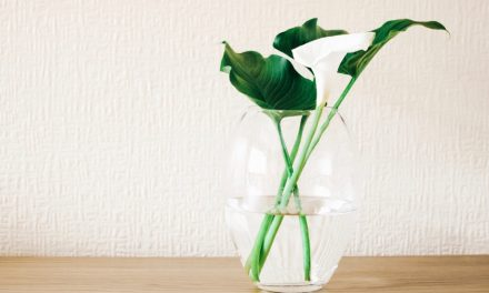 5 DIY Non Toxic Housekeeping Cleaners